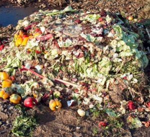 Биологические отходы